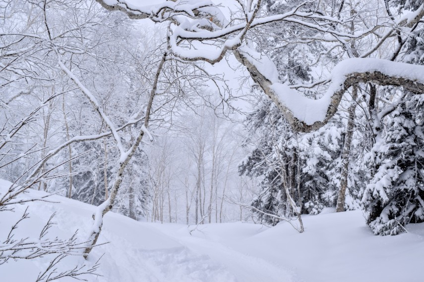powder skiing in kiroro japan trees