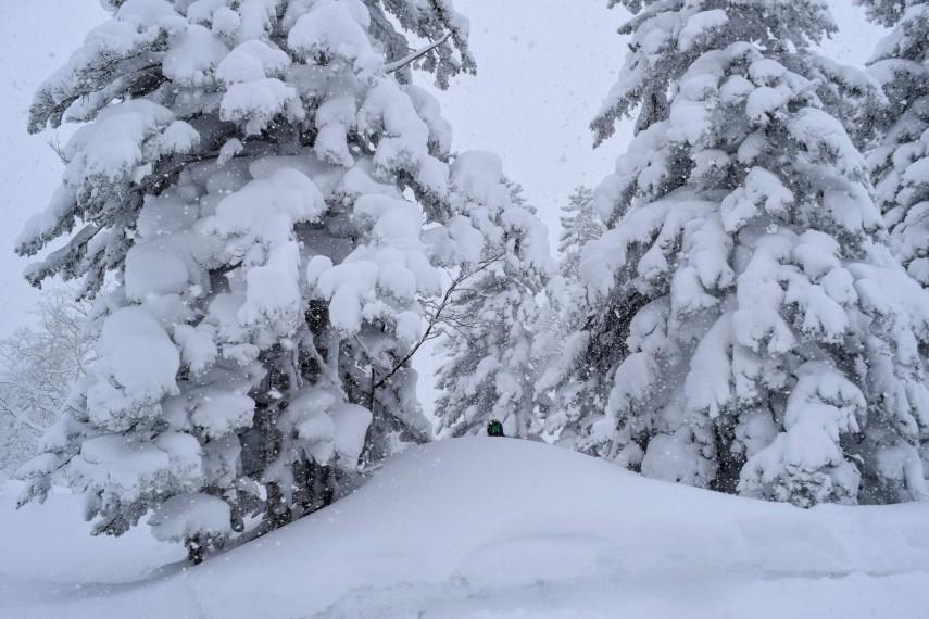 powder snow trees japan kiroro skiing snowboarding